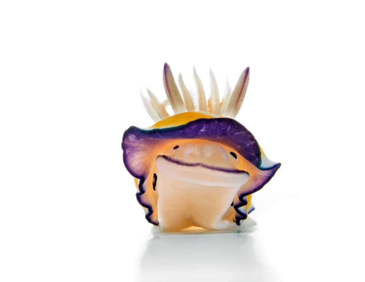 Nudibranquio
