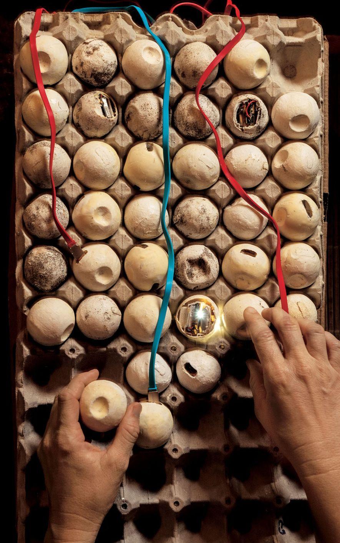 Para luchar contra los furtivos de Costa Rica, la investigadora Helen Pheasey coloca huevos falsos con ...