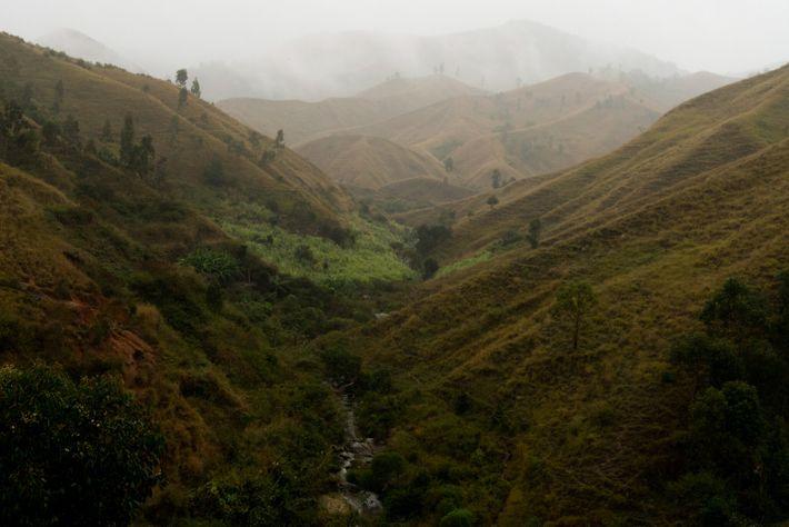 Bosque de Madagascar