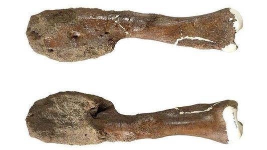 Descubren por primera vez un caso de cáncer en un dinosaurio