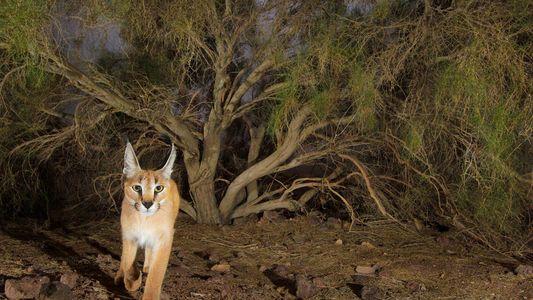 Los animales que sobreviven en el desierto