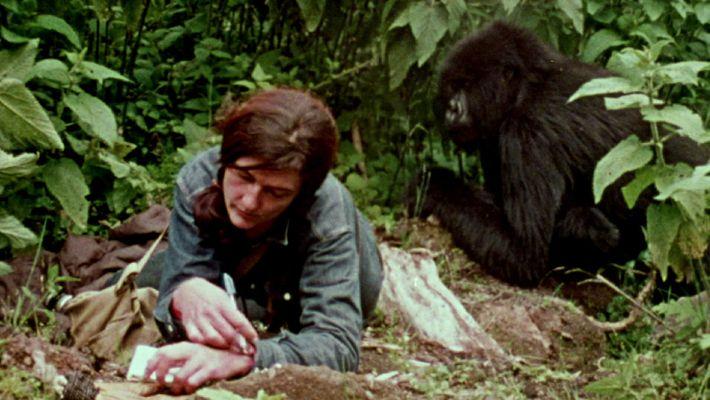 Te enseñamos un fragmento del documental sobre la vida de Dian Fossey con los gorilas