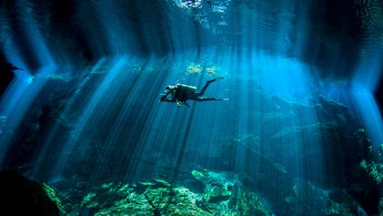 Recorre el mundo submarino con estas fotografías