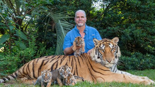 Bhagavan «Doc» Antleposa con tigres en su zoo