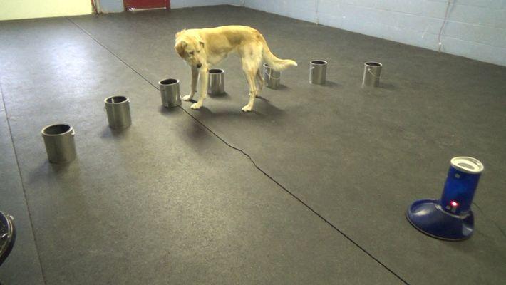Estos perros son capaces de detectar señales de ataques epilépticos
