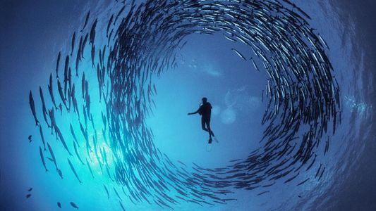 Conoce al maestro de la fotografía submarina en su misión por ayudarnos a ver el mar