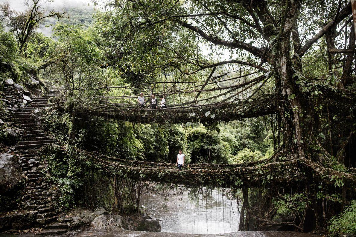 Puente de raíces de dos pisos