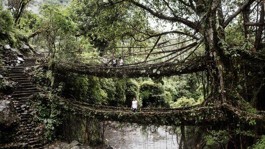 Los puentes de raíces vivas de la India