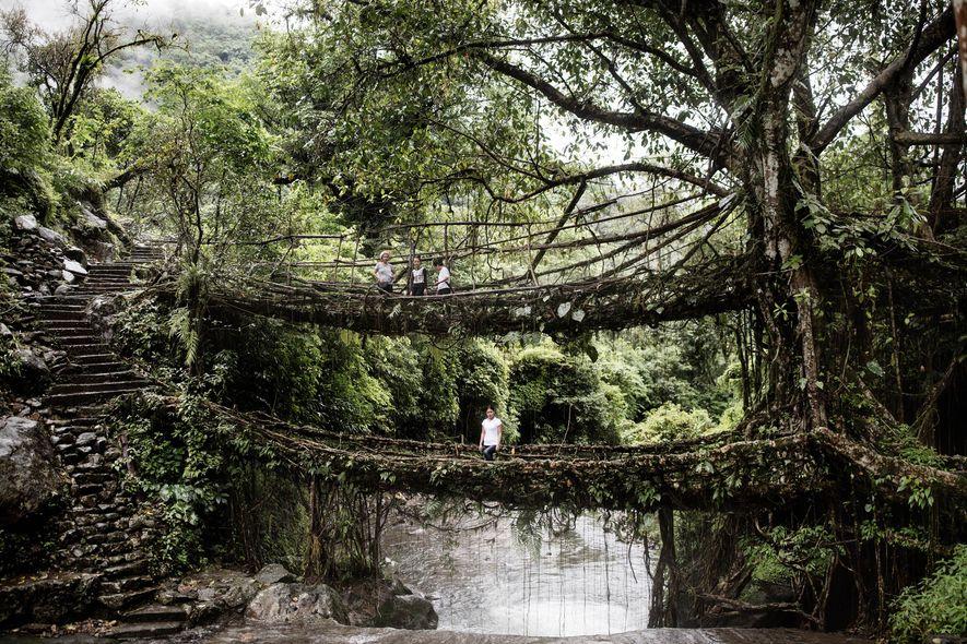 Un puente de raíces de dos pisos en Cheerapunji es una de las principales atracciones de ...