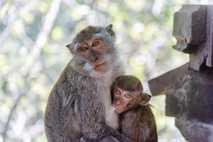 Serpientes venenosas, caimanes, tortugas, sapos, pájaros, monos y grandes felinos circulan día a día dentro y ...