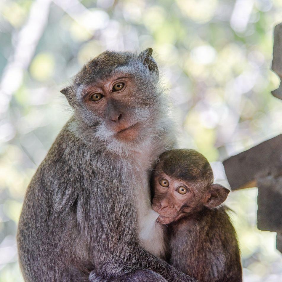 Millones de animales salvajes son víctimas del tráfico ilegal cada año en el Amazonas