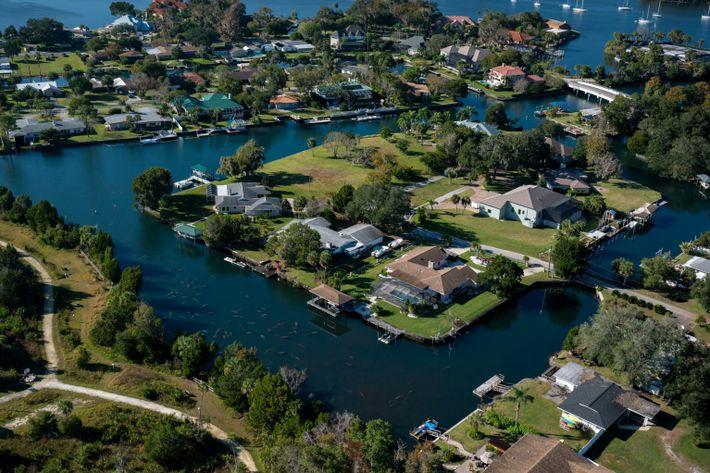 Manatíes en los canales de Crystal River, Florida