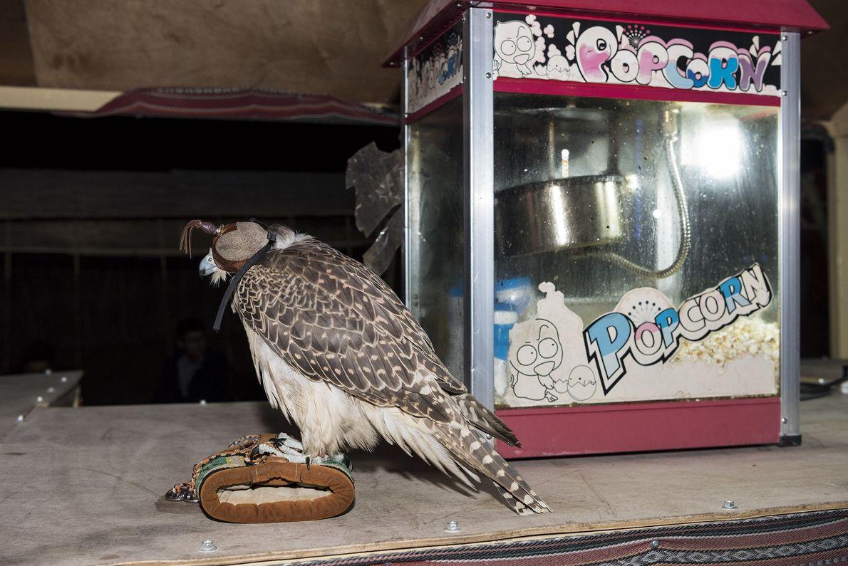 Una máquina de palomitas y un halcón