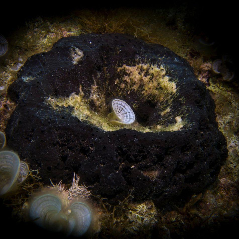 El fósil de una esponja de 890 millones de años podría ser el animal más antiguo ...