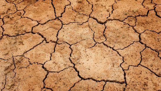 España, con un 75% de su territorio en riesgo de desertificación, podría ser uno de los ...