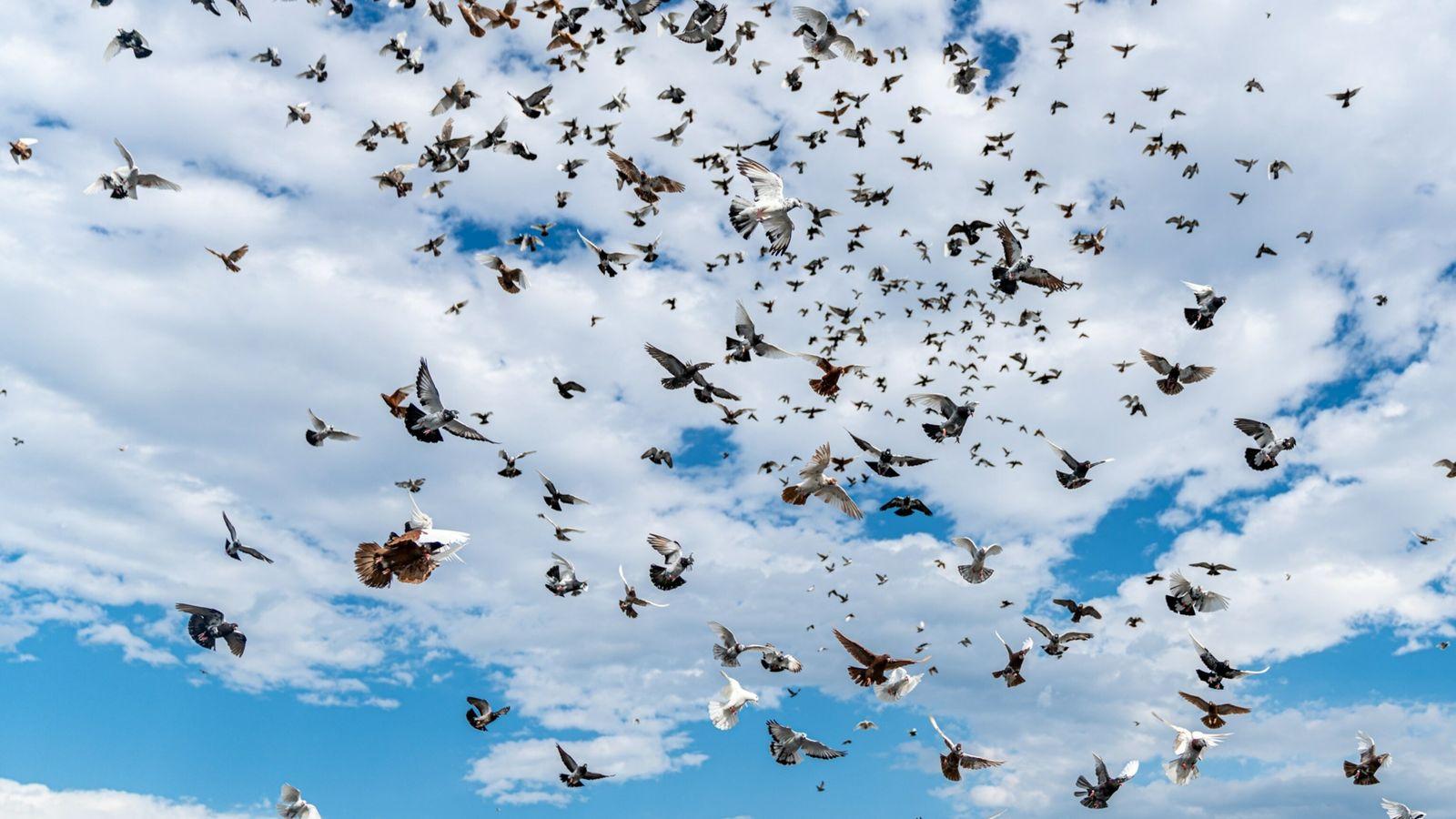 Una bandada de palomas vuela sobre Bushwick