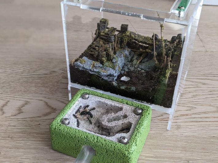 Colonia de hormigas