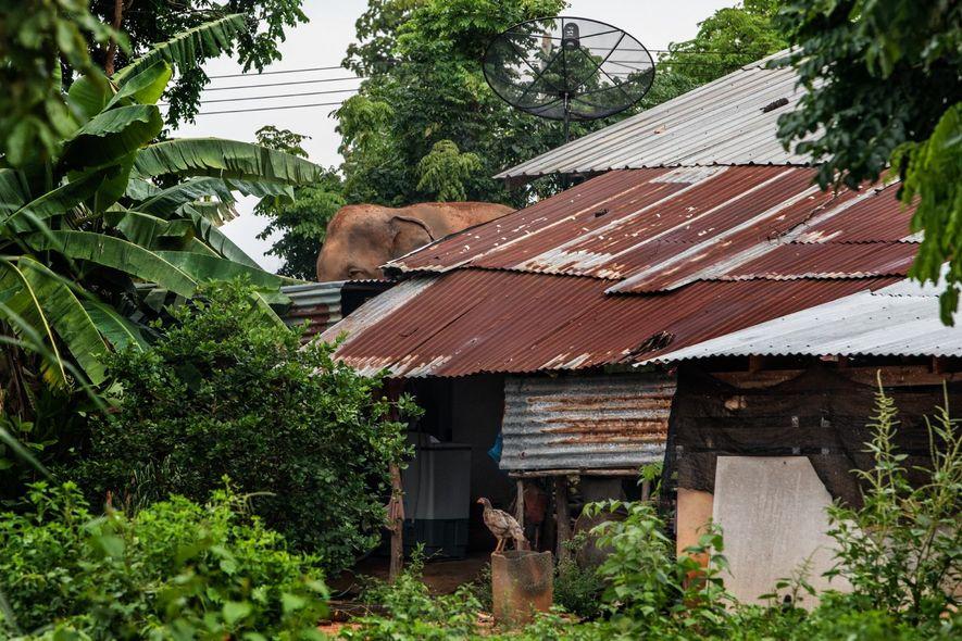 Elefantes de Ban Ta Klang