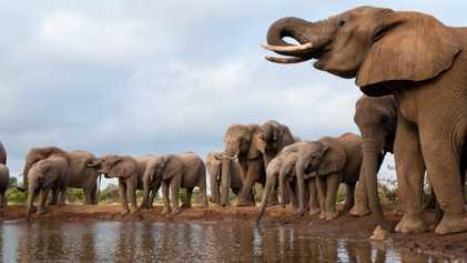 ¿Qué está matando a los elefantes de Botsuana? Estas son las principales teorías