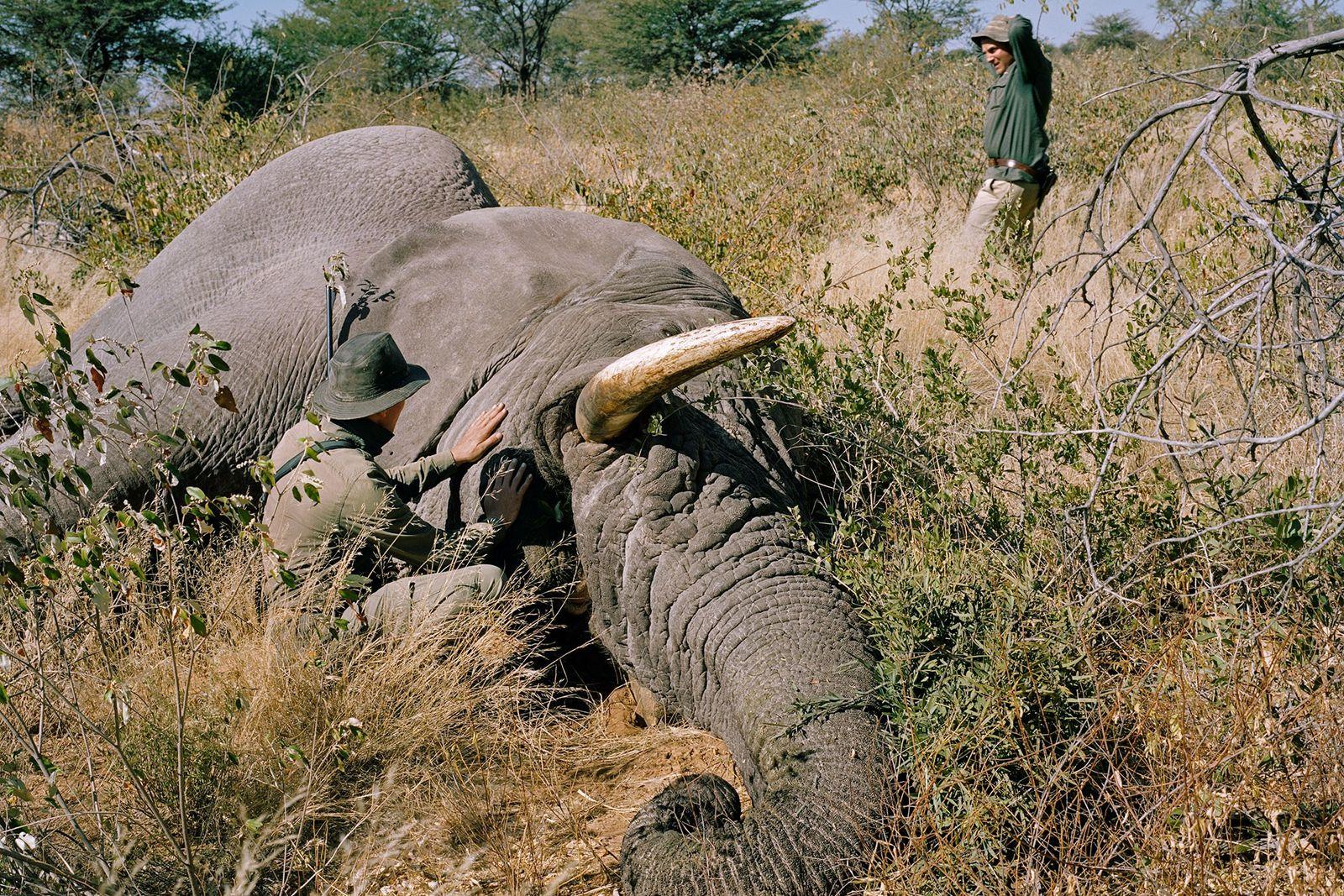 Un cazador alemán mata a un elefante