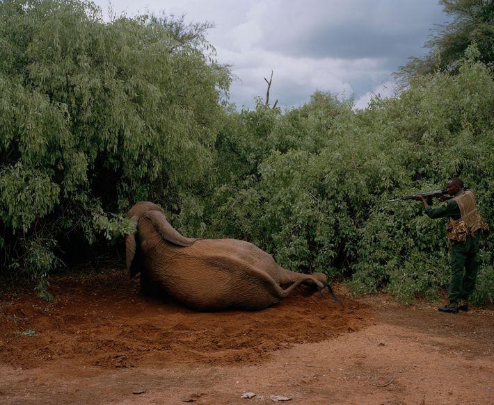 Elefante sacrificado