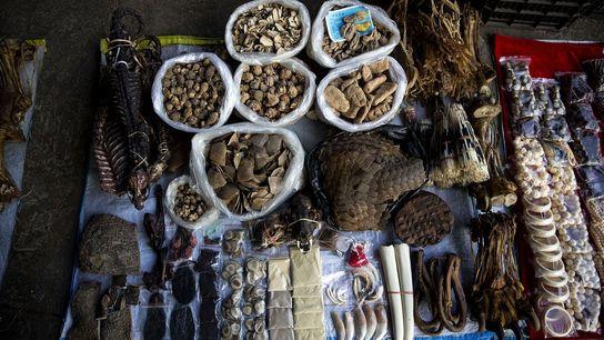 Productos ilegales de animales