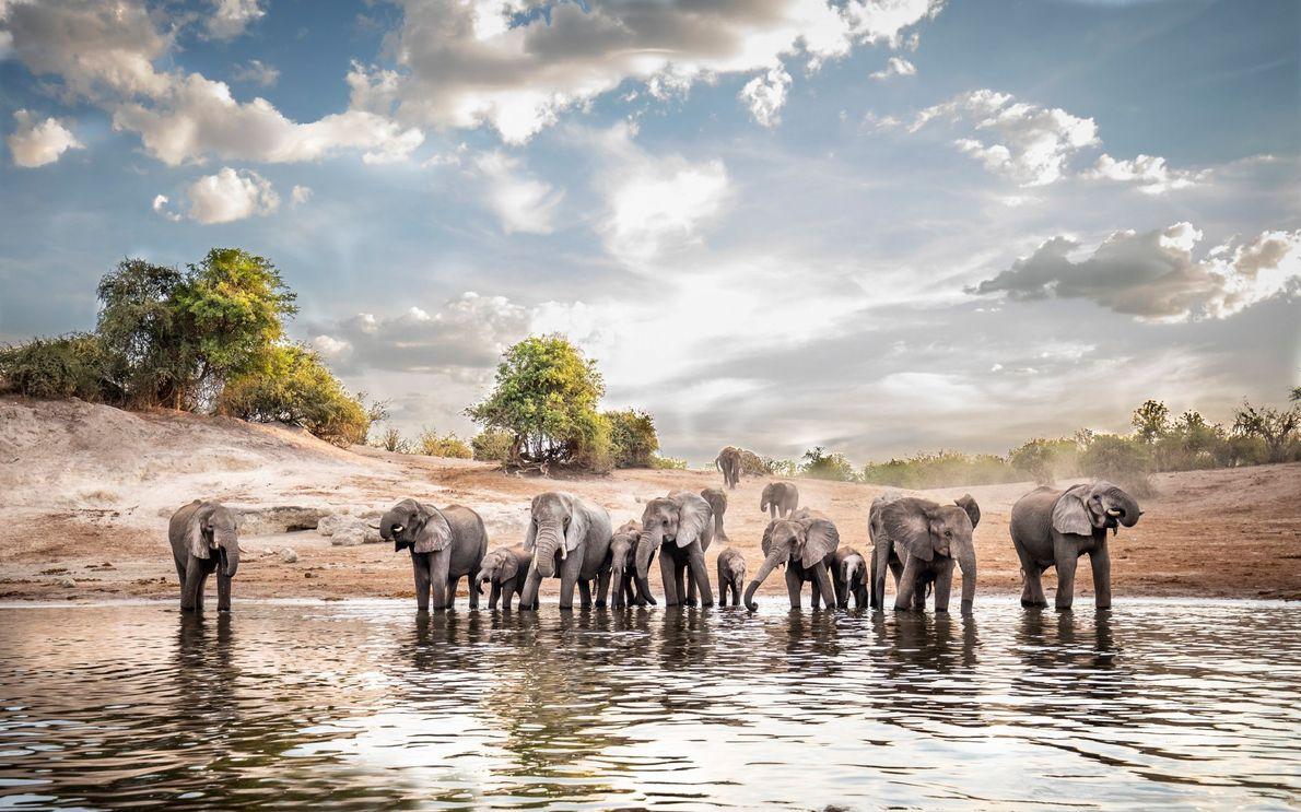 Río Chobe, Botsuana