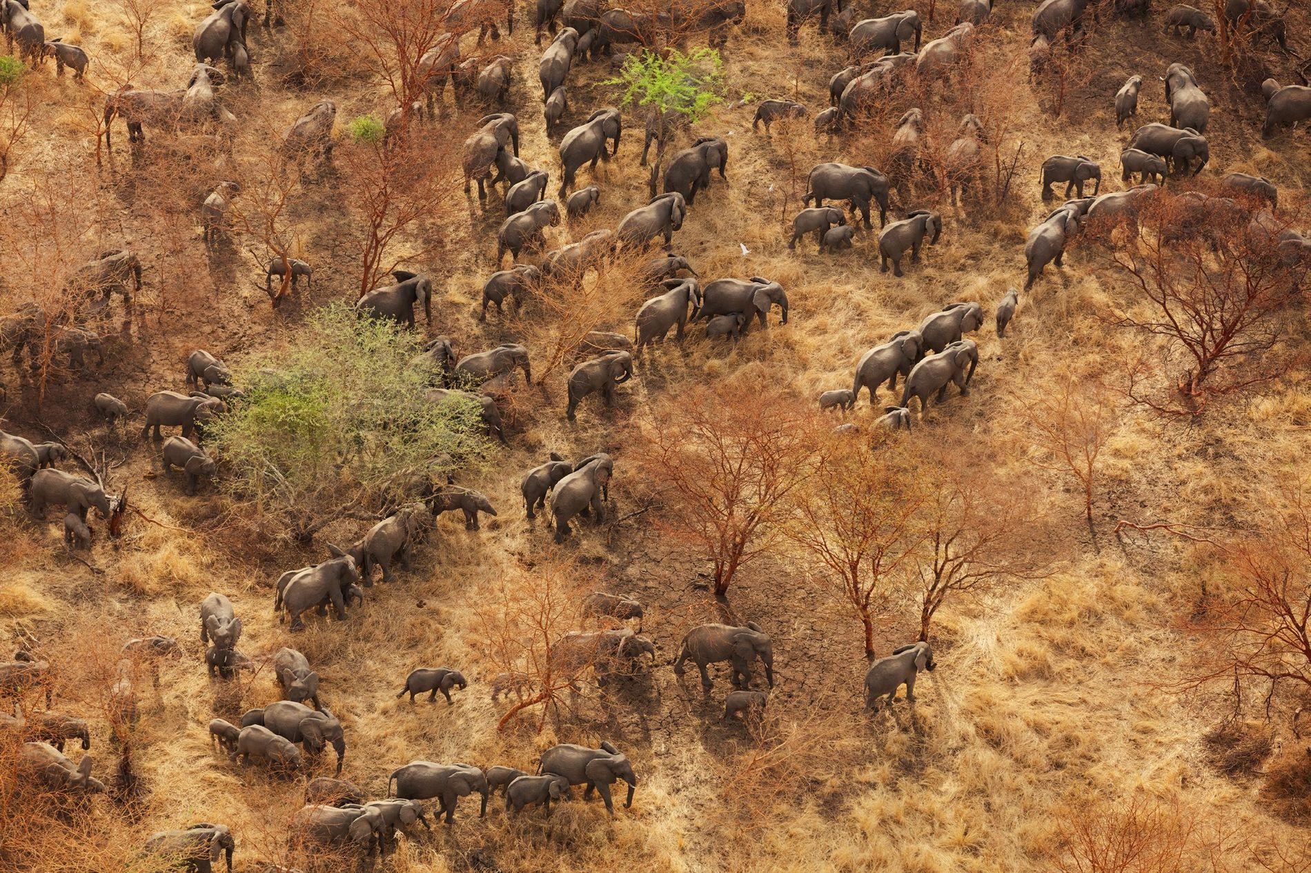 Parque nacional de Zakouma, Chad: Este parque, una región de pastizales y acacias en el sudeste ...
