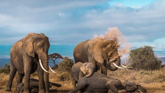 24 fotografías de fauna salvaje del concurso de National Geographic