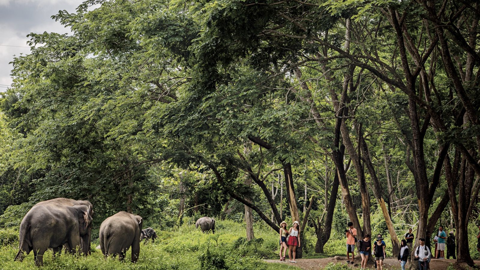Elephant Valley Thailand