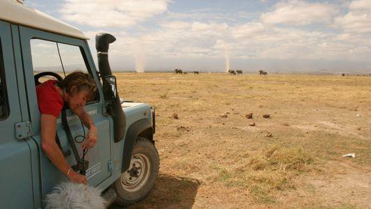 ¿Qué «dicen» los elefantes? Esta biblioteca revela los misterios de su comunicación