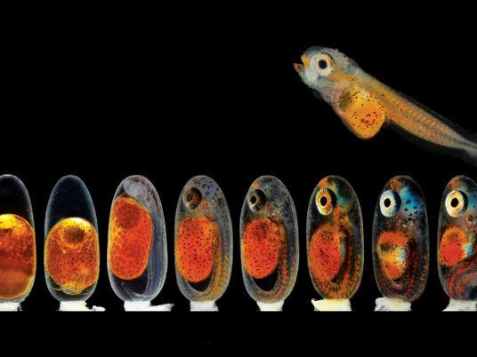 El maravilloso y colorido mundo microscópico