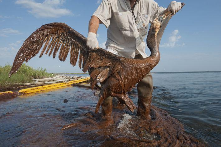 Conmemoramos el día de las especies en peligro de extinción