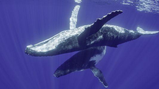 Los secretos de las ballenas en Disney Plus