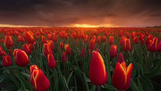 El equinoccio vernal: datos sobre el primer día de la primavera