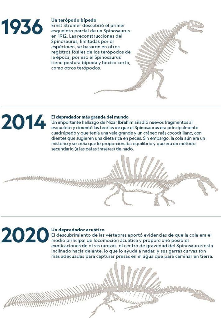 Spinosaurus 05