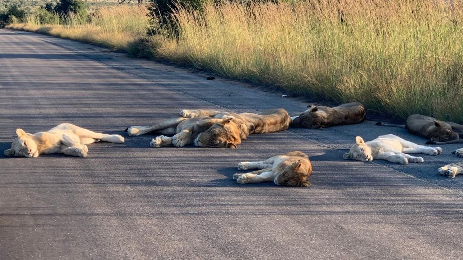 Un grupo de felinos aprovecha para echarse una siesta en pleno asfalto ante la ausencia de ...