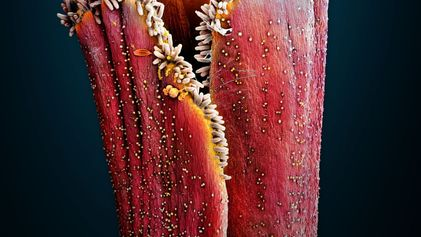 Estas imágenes microscópicas revelan de dónde sacan su sabor las hierbas aromáticas