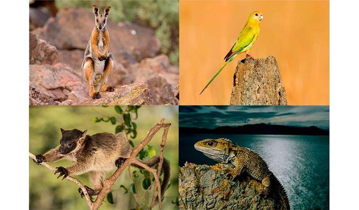 Cuatro animales que se enfrentan a un creciente riesgo de extinción con el aumento de las ...