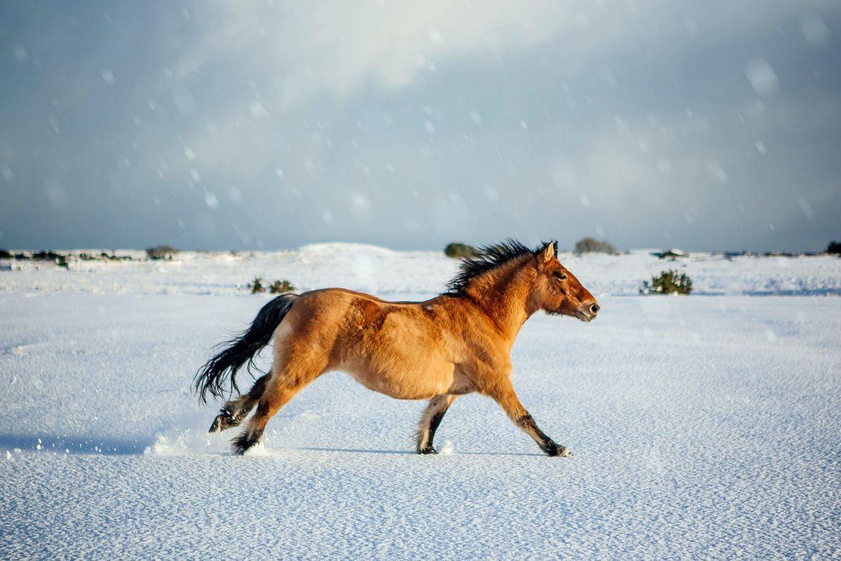 Un poni en la nieve