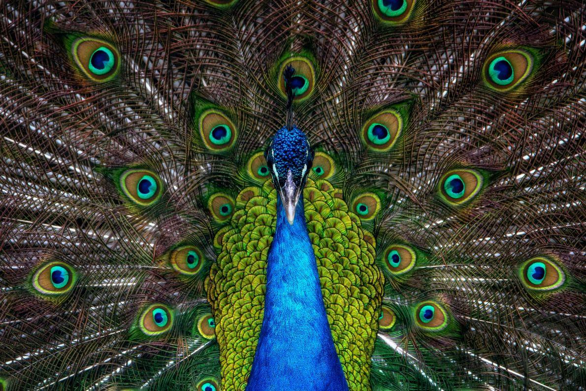 Mostrando las plumas