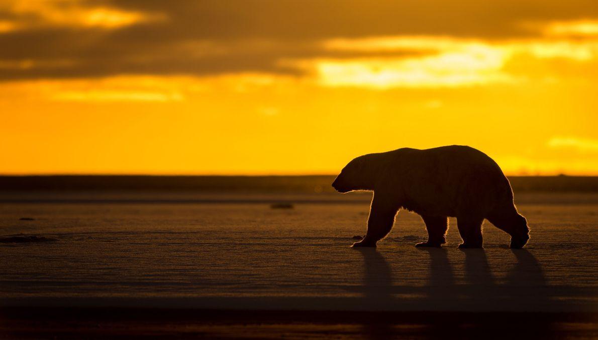 Amanecer ártico