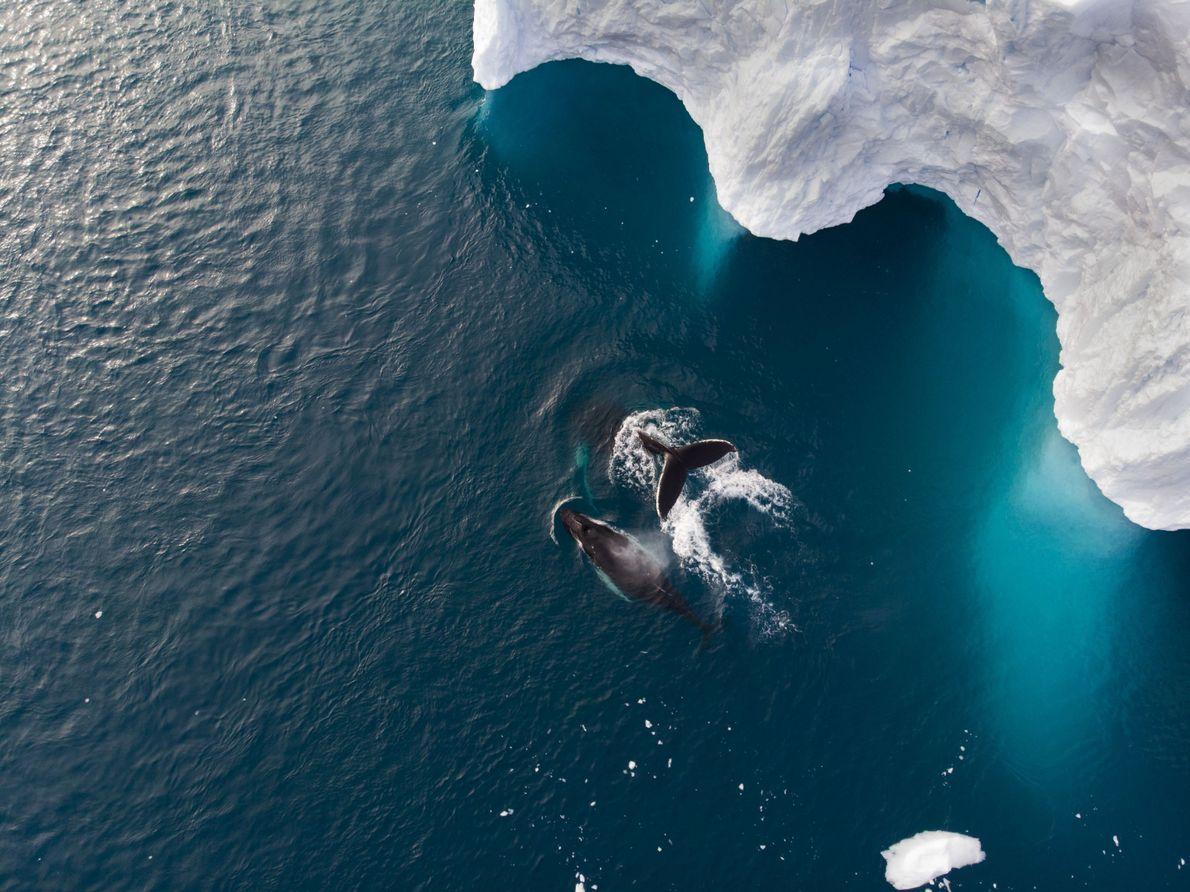 Nadando juntas