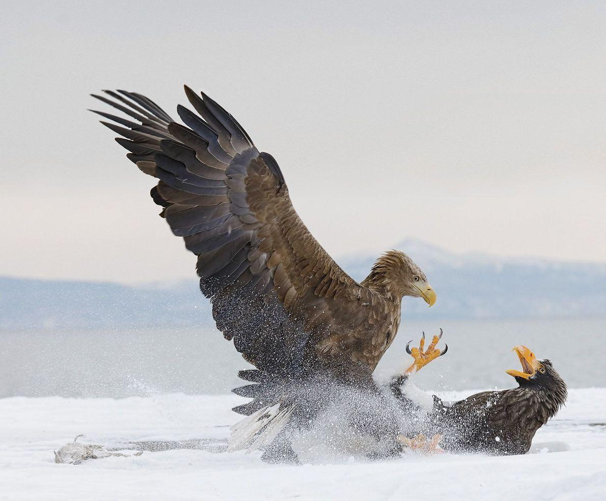 Gritos de águilas