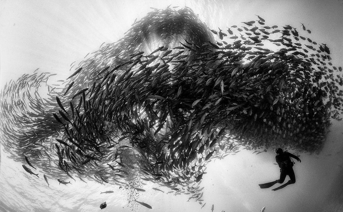 Remolino de peces