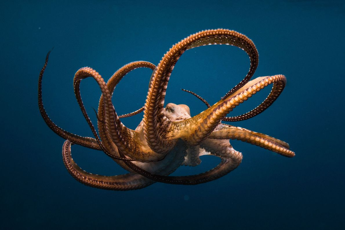 Drama subacuático