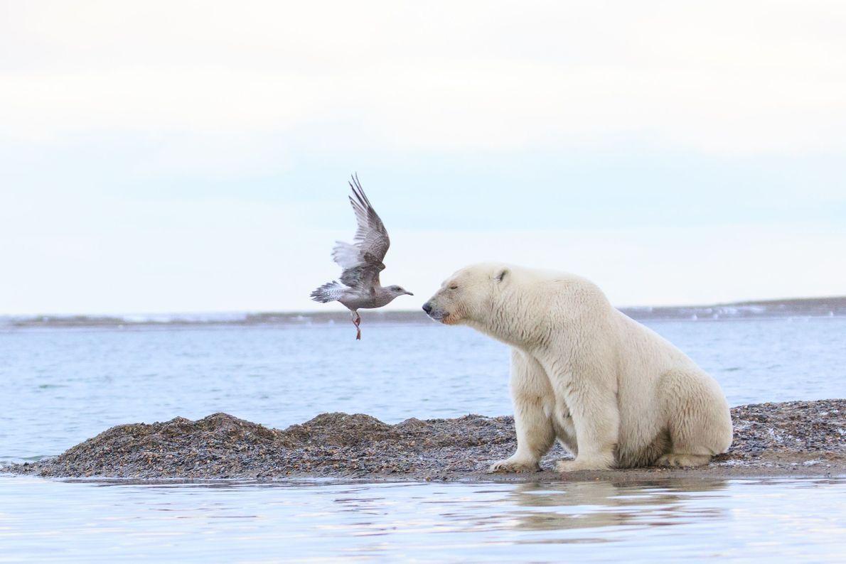 Beso de esquimal