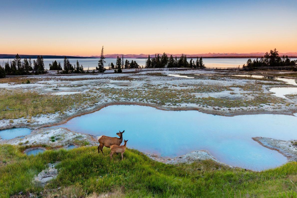 Amanece en Yellowstone