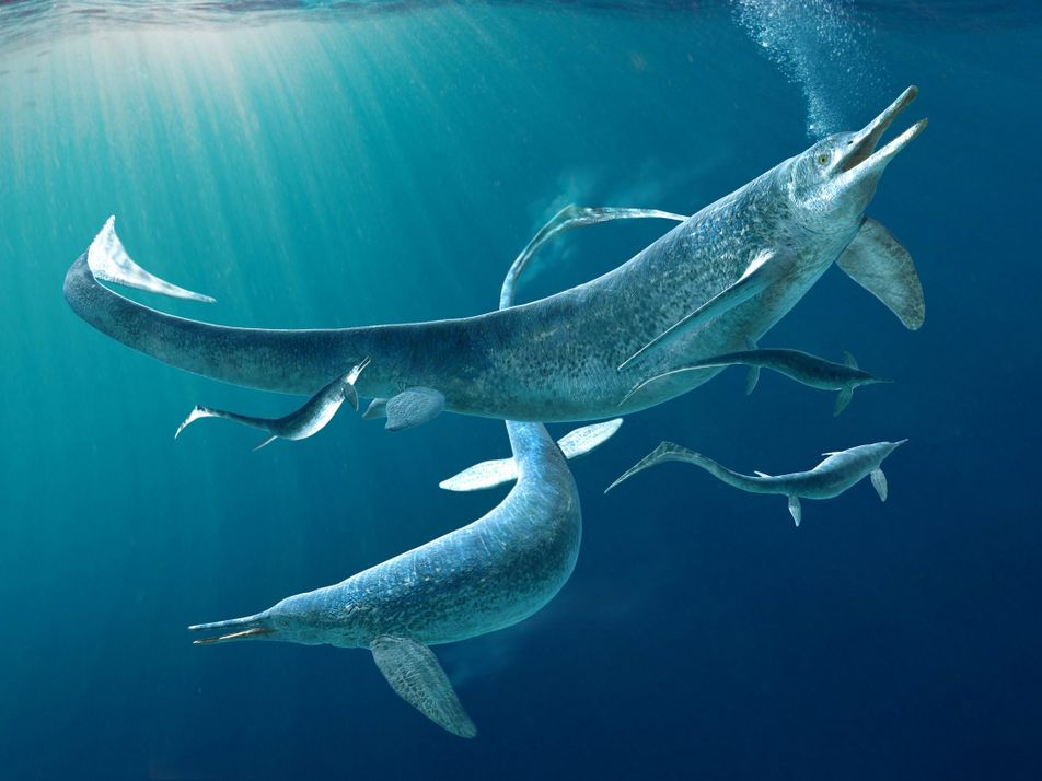 Descubren un depredador marino de cuatro metros de largo dentro del estómago de un ictiosaurio