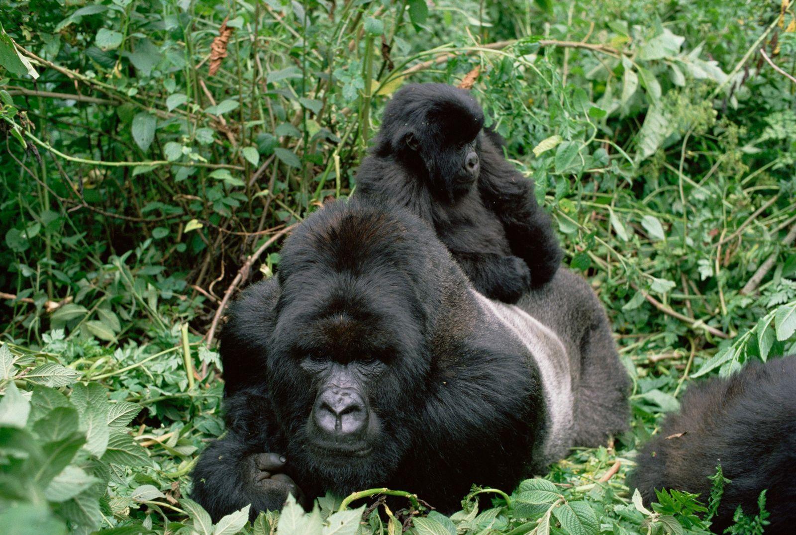 Padres animales y sus crías